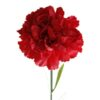 Dianthus Carn Red